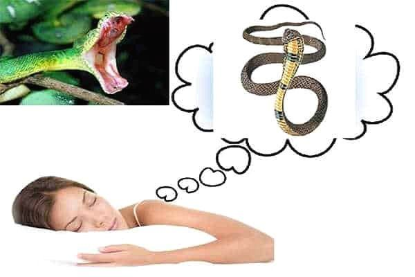 Mơ thấy rắn là điềm gì? Lành hay dữ?