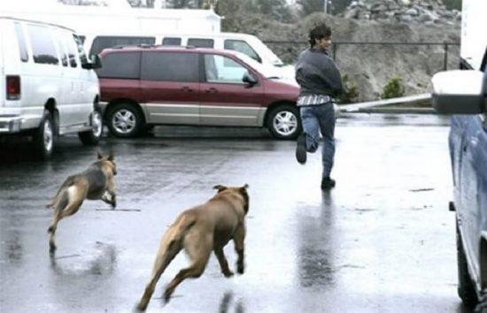 Nằm mơ thấy chó cắn đánh con gì? Là điềm dữ hay lành?